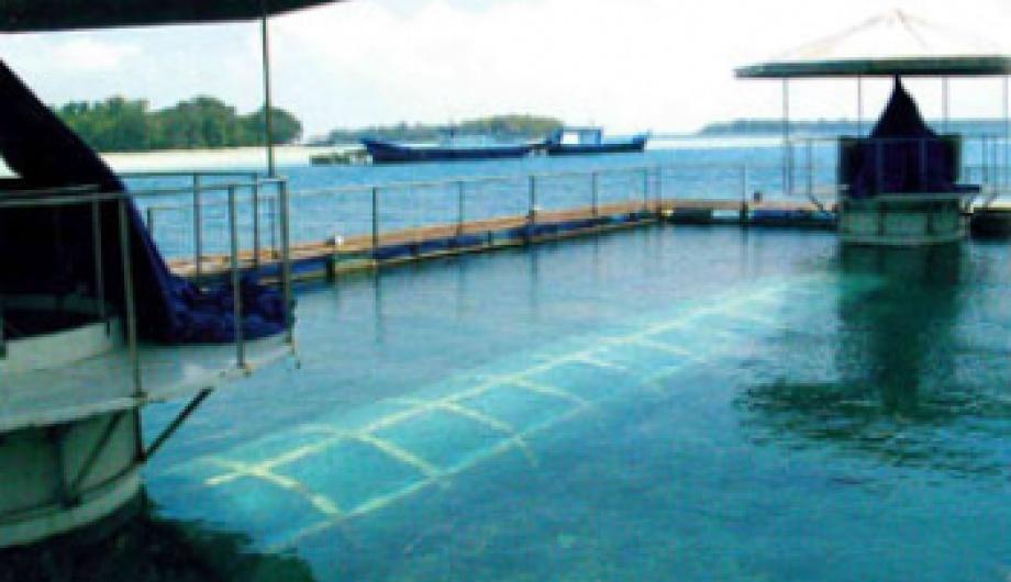 Underwater Adventure in the Bay of Jakarta